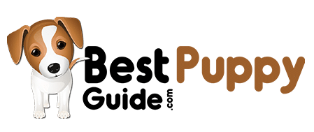 Best Puppy Guide - The Best Stuff for your Dog